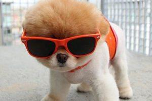 cool-puppy
