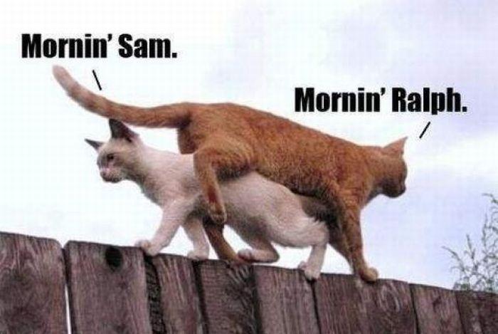 Morning greetings 1funny morning greetings m4hsunfo