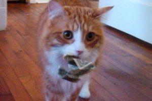 cat-found-money
