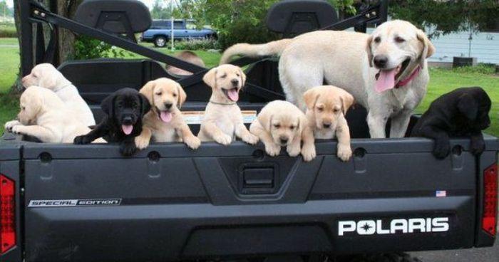 Puppy Truck 1funny Com