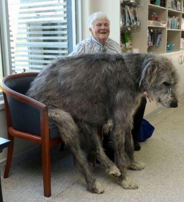 World Big Dog