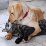 Dog Kisses Cat