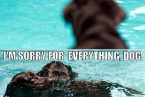 save-me-dog