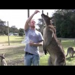 Feeding a Big Kangaroo