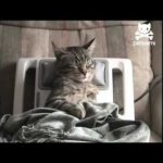 Cat Gets Relaxing Massage