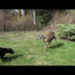 Dog & Deer – Best Friends