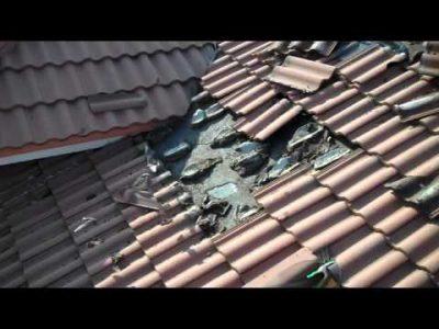 Bat Roof Infestation