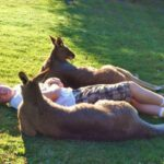 Chilling with Kangaroos