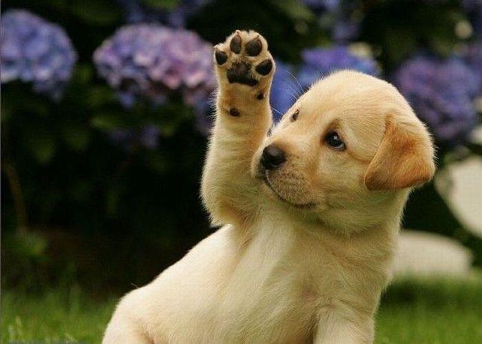 Puppy Says Hi – 1Funny.com