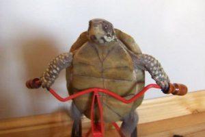 turtle-bike