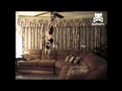 Athletic Jumping Dog