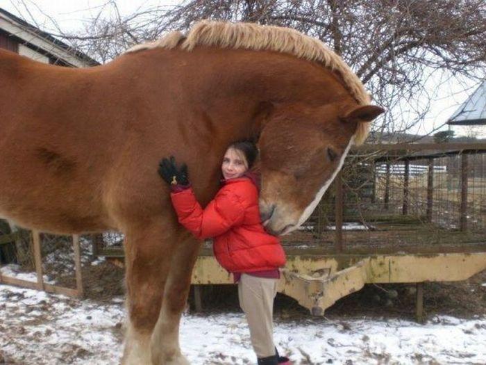 Pics Photos - Big Horse Kiss Image