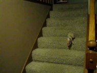 Piglet Down the Stairs