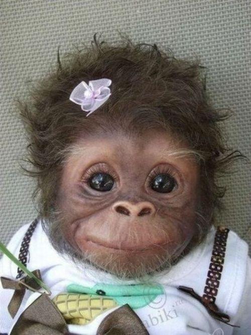 Admin pictures 11 babies monkeys