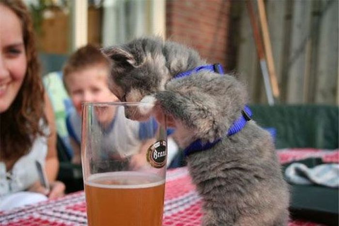 Suziq Wants It In http://1funny.com/puppy-wants-beer/