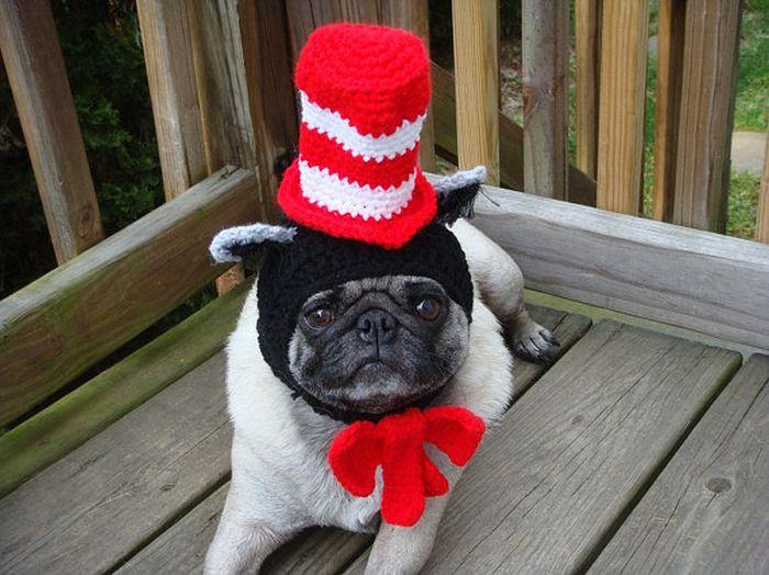 Cute Pug Hats 1funny Com