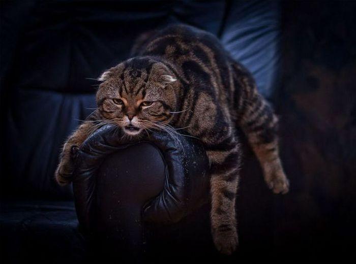 Tired Cat 5 - 1Funny.com