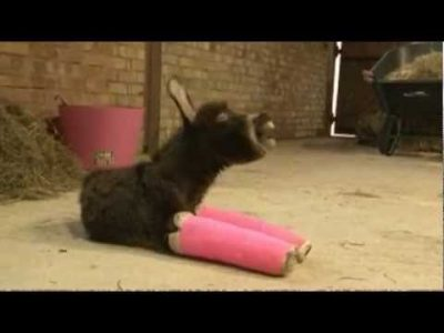 Premature Donkey in Pink Casts