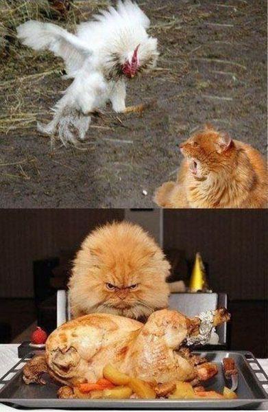 chicken dinner � 1funnycom
