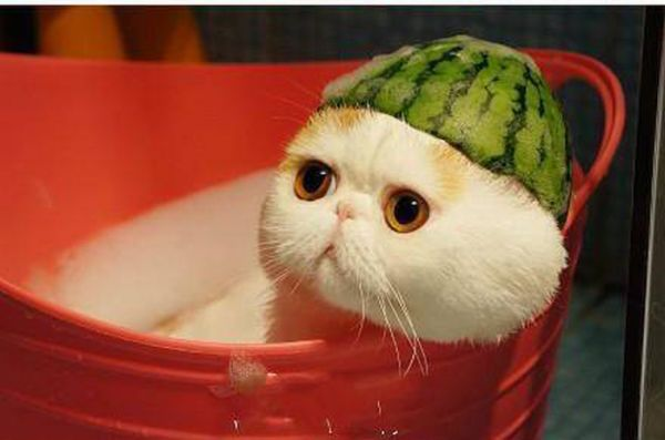 Cute Cat Watermelon Hat