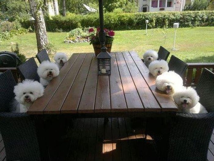admin Pictures 4 dogs , tables