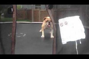 A Dog & a Trampoline