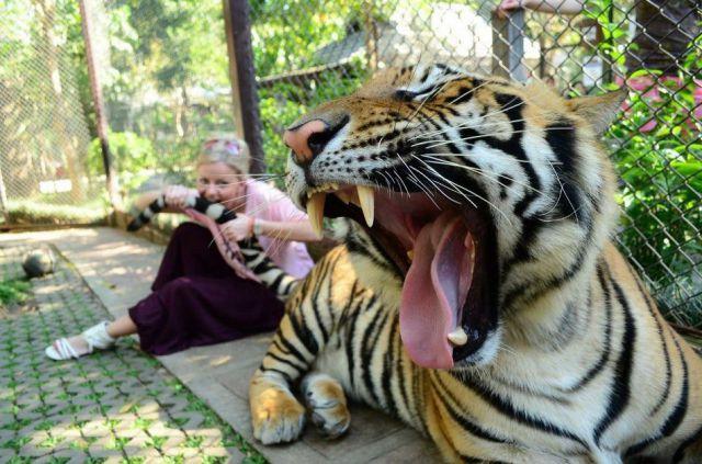 Girl Bites Tiger Tail