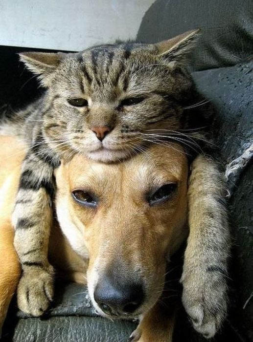 cat-on-dog.jpg