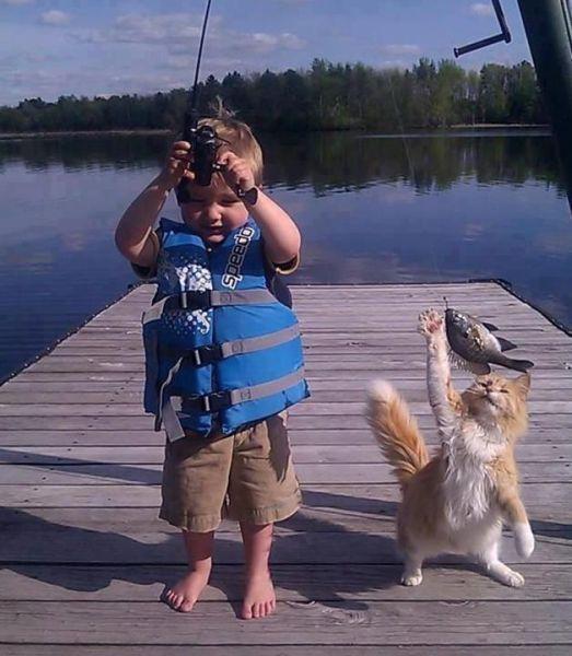 Cat Wants Fish
