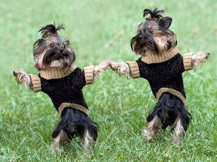 Dogs Holding Hands