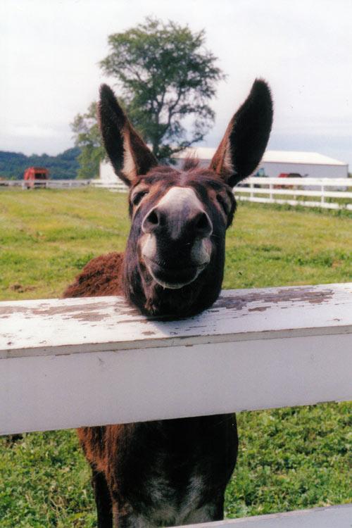 Smiling Animals 1funny Com
