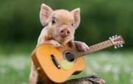 Piglet Guitar
