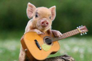 piglet-guitar