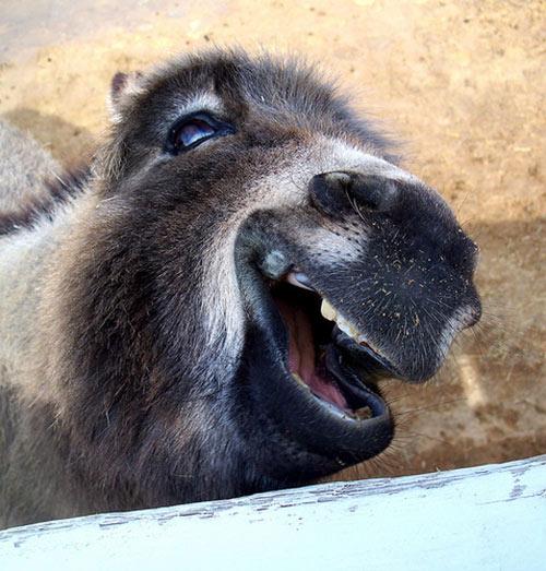 Smiling Animals – 1Funny.com