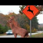Please Move The Deer Crossing