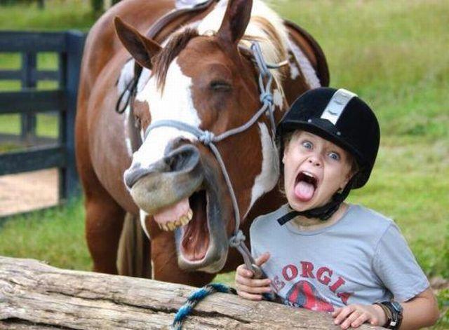 Horse Face 2