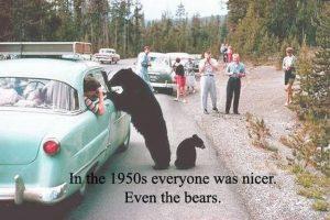 nice-bears