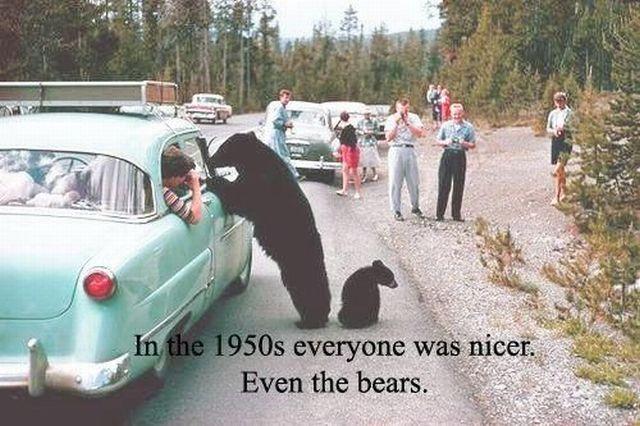 1950s Nice Bears