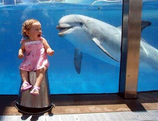 Dolphin Scares Girl