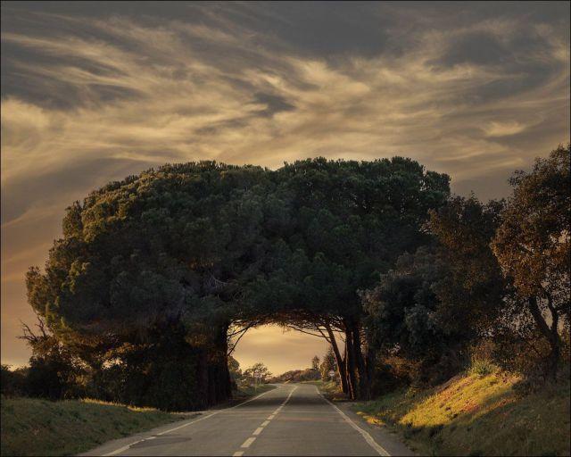 Road Tree Canopy