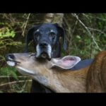 Deer & Dog Friendship