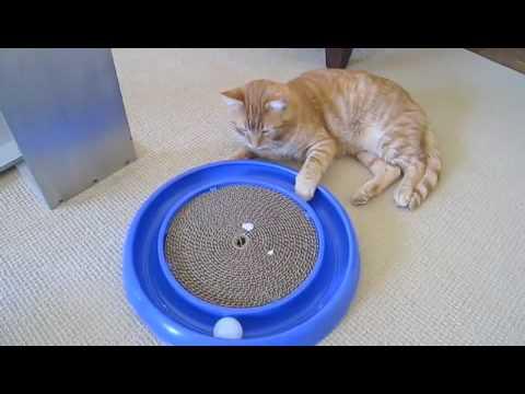 Сделать игрушку для кота