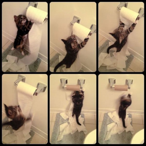 Toilet Paper Kitten