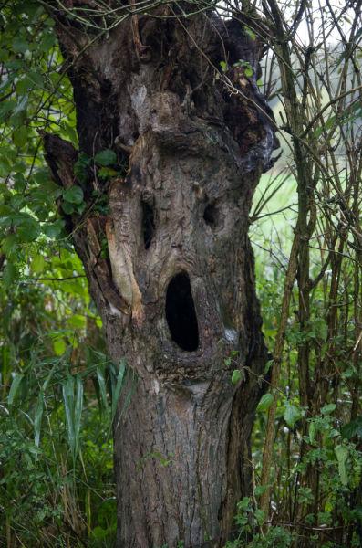 Tree Face 2