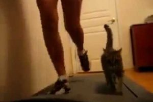 Cat Jogging with Owner