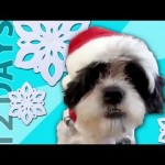 "Animals Sing ""12 Days of Christmas"""