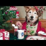 A Doggy Christmas