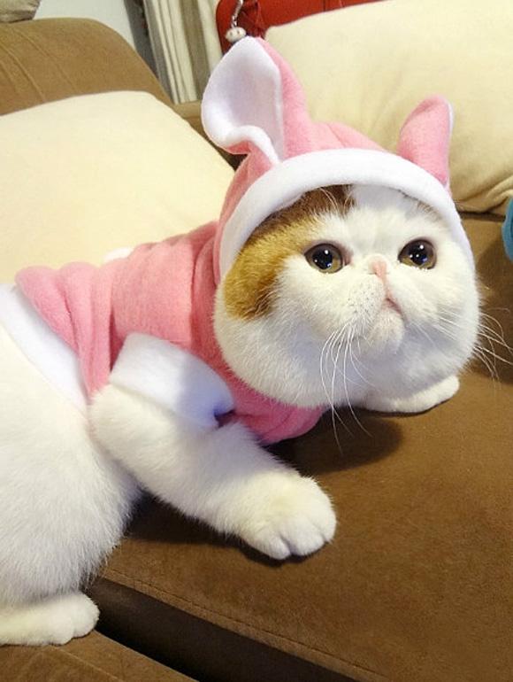 Long Cat Japan
