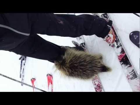 Porcupine Bites Skier