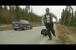 Wild Turkey Attacks Reporter